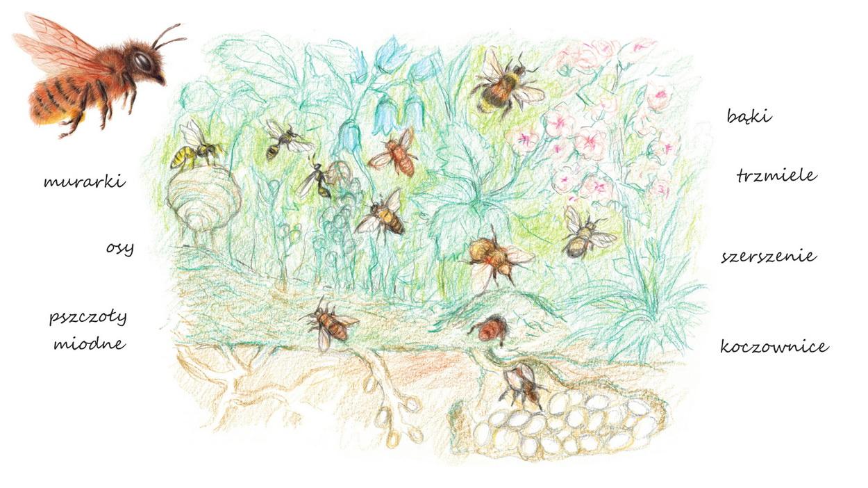 Jak odróżnić pszczołę od nie pszczoły