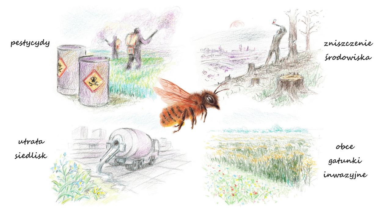 Zagrożenia dla pszczół i owadów