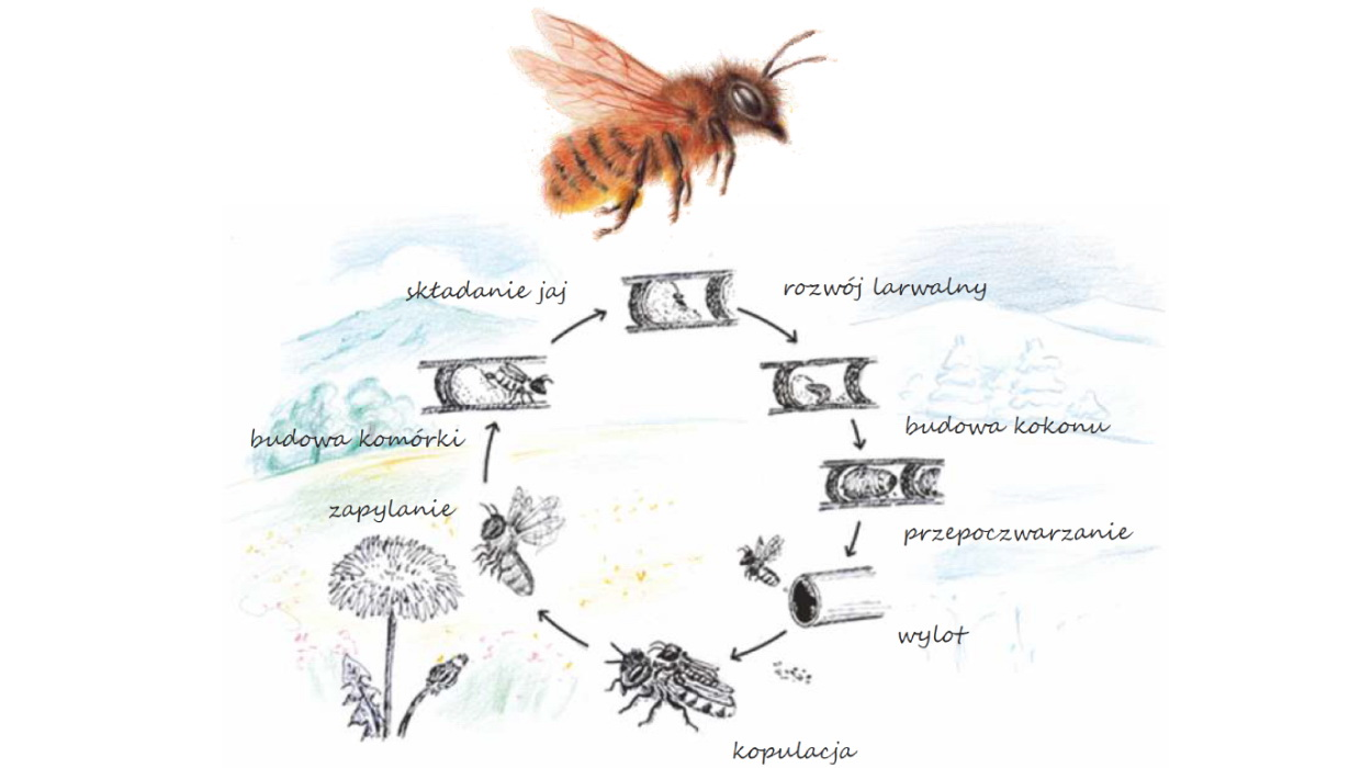 Rok z życia pszczoły