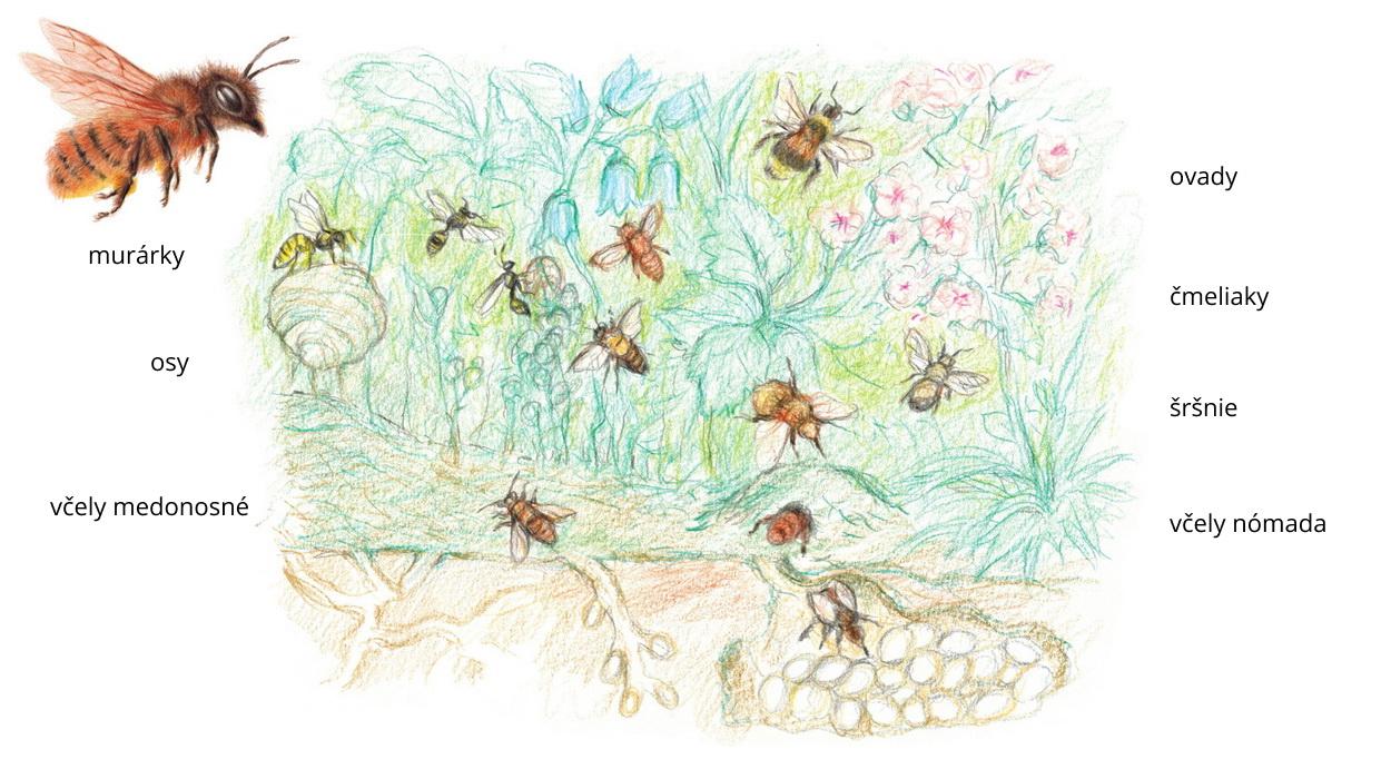 Ako rozlíšiť včelu od iného hmyzu?