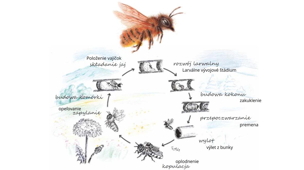 Rok v živote včely