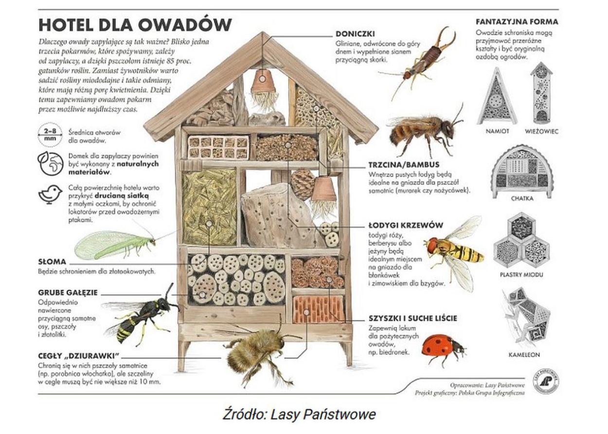 Domek dla owadów hotel