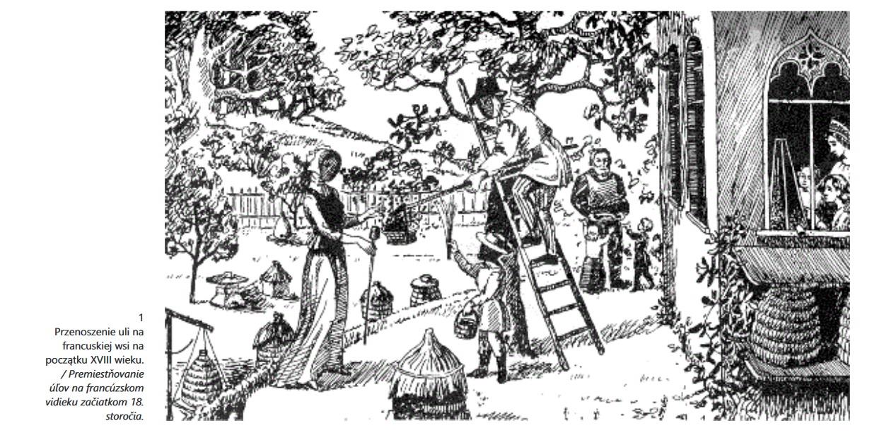 Przenoszenie uli na francuskiej wsi na początku XVIII wieku.